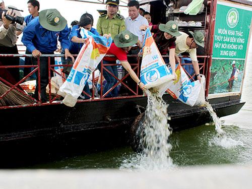 Cá giống được thả xuống hồ  để cân bằng  sinh thái