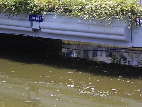 Cá chết khiến đoạn kênh bị bốc mùi hôi thối Ảnh: SỸ ĐÔNG