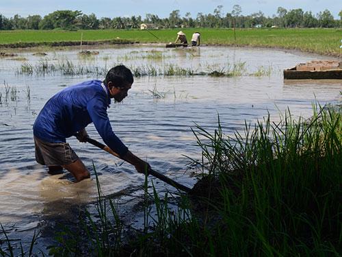 Ruộng nhà ông Trương Tấn Minh đang bị đào lấy lớp đất sét