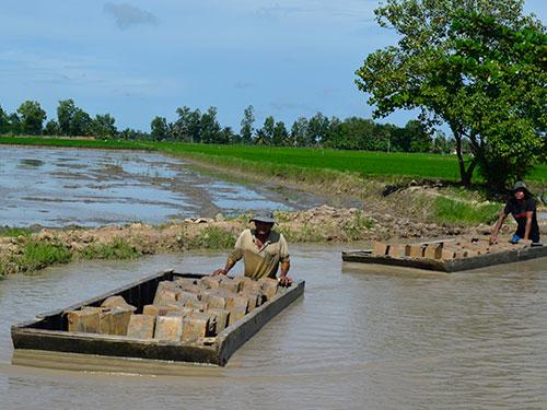 Nông dân huyện Châu Thành, tỉnh Trà Vinh rầm rộ bán đất sét ruộng