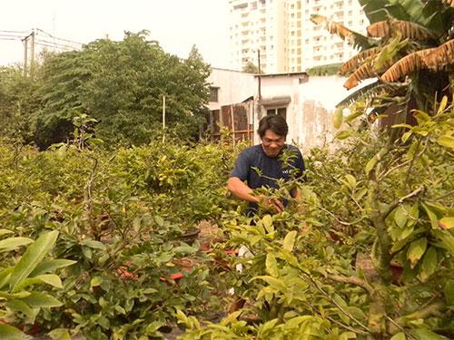 Các vườn mai ở làng mai Thủ Đức, TP HCM đang được chăm sóc nước rút