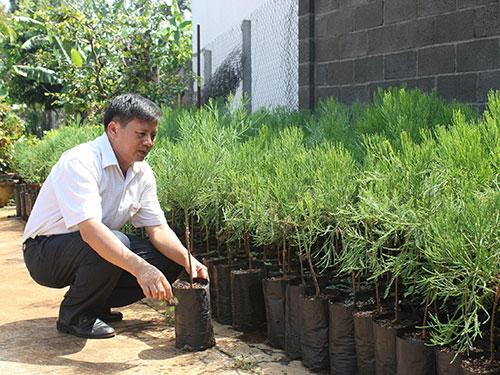 TS Trần Vinh ghép thành công nhiều cây thủy tùng con