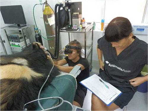 Nhân viên Tổ chức Bảo vệ động vật châu Á đang chăm sóc gấu Ảnh: Phương Trinh