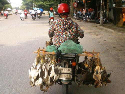 Chim trời được chở đầy xe rao bán trên đường phố Thanh Hóa