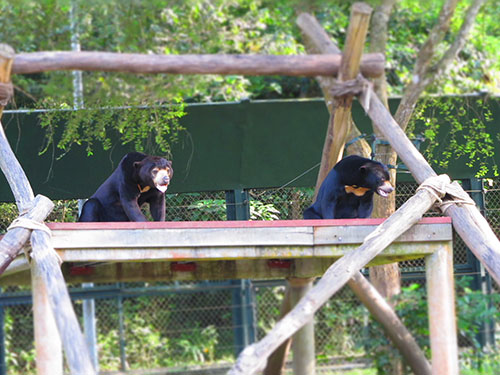 """""""Nạn nhân"""" của các vụ săn bắt, mua bán động vật hoang dã được đưa về Trung tâm Cứu hộ gấu Tam Đảo, tỉnh Vĩnh Phúc  Ảnh: Trung tâm Giáo dục Thiên nhiên"""