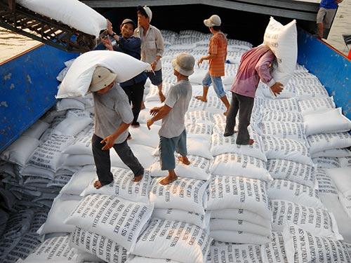 ĐBSCL vẫn chiếm lượng lớn trong tổng lượng gạo xuất khẩu của Việt Nam trong năm 2013. Ảnh: NGỌC TRINH