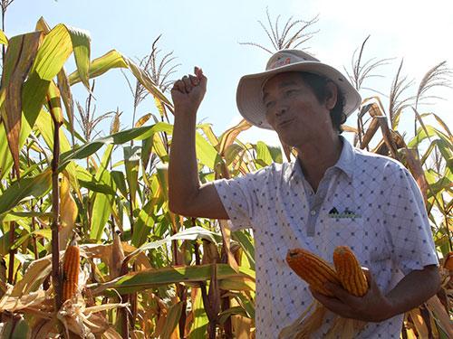 Ông Nguyễn Văn Sự, Tổng Giám đốc HAGL, bên cánh đồng bắp ở Campuchia