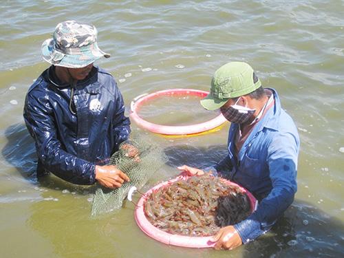 Thủy sản là ngành liên tục phải hứng chịu các vụ kiện chống bán phá giá, chống trợ cấp từ các thị trường Ảnh: THANH VÂN