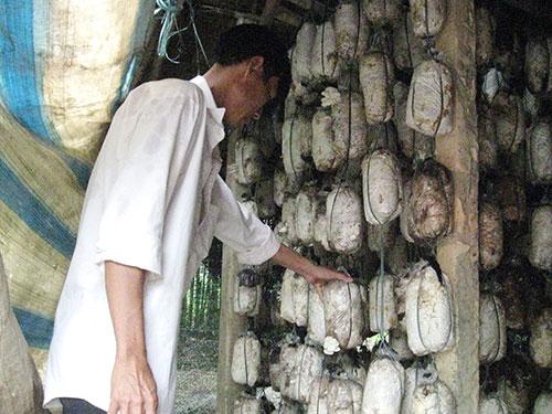 Nhiều trại sản xuất nấm ở xã Sông Trầu, huyện Trảng Bom, tỉnh Đồng Nai phải bỏ hoang do sản phẩm không tiêu thụ được Ảnh: XUÂN HOÀNG