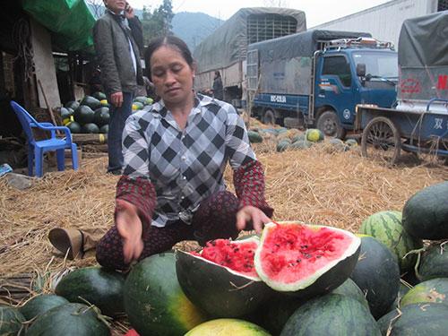 Do bị ùn ứ nhiều ngày, dưa hấu chở qua Trung Quốc bị trả về vì quá chín, phải chất đống bên hông cửa khẩu Tân Thanh