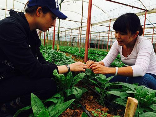 Chuỗi cửa hàng Oganica sản xuất rau hữu cơ ở Đà Lạt để đưa về tiêu thụ tại TP HCM Ảnh: SƠN NHUNG