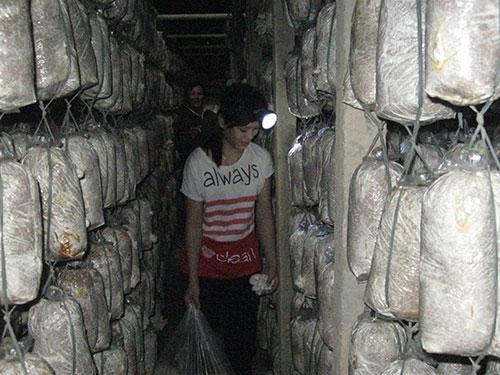 Hàng trăm hộ trồng nấm ở Đồng Nai hiện vẫn chưa tìm được đầu ra cho sản phẩm