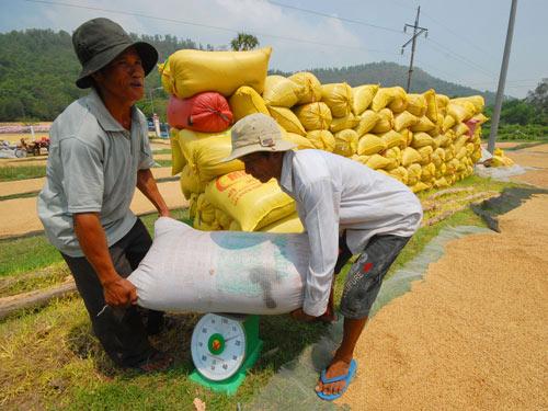 Nhiều DN ở ĐBSCL xin trả chỉ tiêu xuất khẩu gạo. Ảnh tư liệu