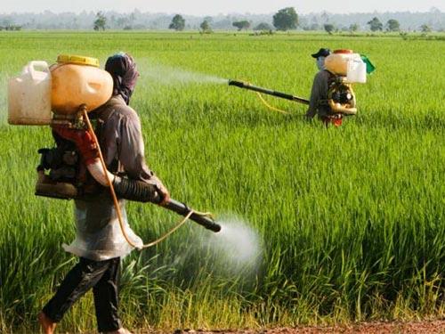 Organophosphate trong thuốc diệt côn trùng có thể gây hại cho hệ thần kinh Ảnh: MNT