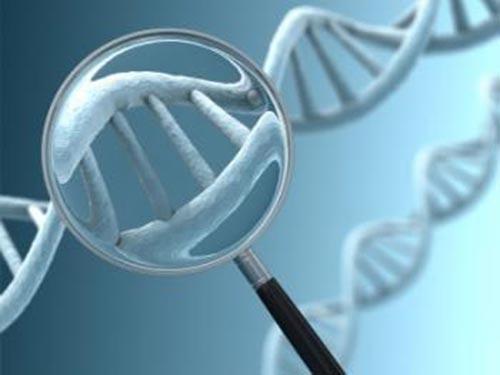 Nghiên cứu phát hiện rằng người có ít phiên bản gien AMY1 dễ bị béo phì. (Ảnh minh họa từ MNT)