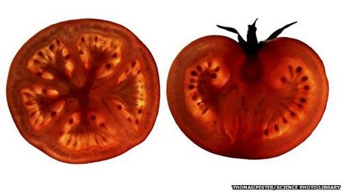 Chất lycopene trong cà chua có thể cải thiện lưu thông máu ở bệnh nhân tim mạch (Ảnh BBC)