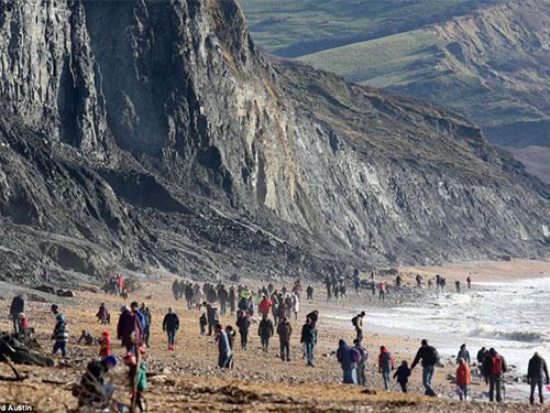 Bờ biển Kỷ Jura đang tràn ngập người săn tìm động vật hóa thạch Ảnh:  Daily Mail