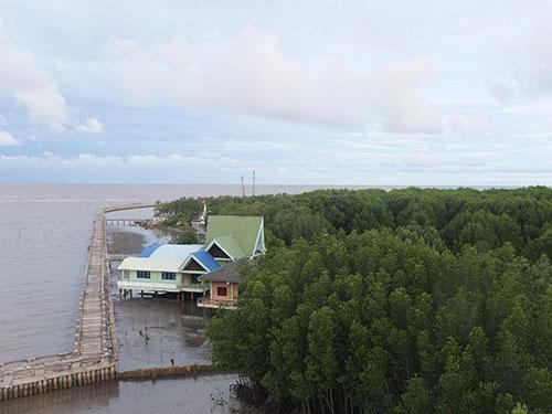 Trung bình mỗi năm, khoảng 1.800 ha rừng ngập mặn Cà Mau đã bị xói lở  Ảnh: THIÊN KIM