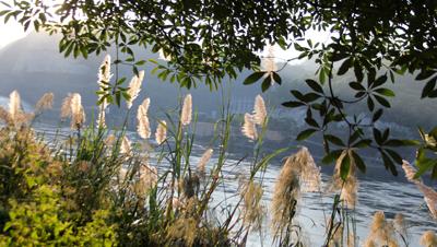 Những vệt hoa lau ánh lên bên bờ sông Đà tạo cho cảnh sắc thiên nhiên thêm phần mềm mại, trữ tình.
