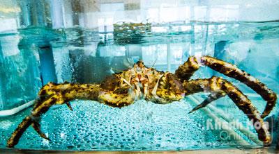 Cua Alaska trong bể tại nhà hàng The Costa Seafood. Ảnh: Trần Minh Ngọc
