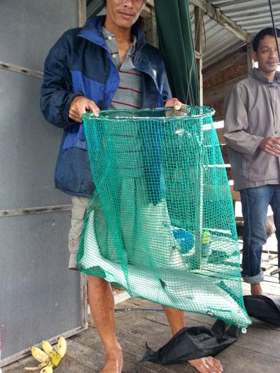 Cá mập con được người dân đánh bắt được tại biển Vạn Ninh.