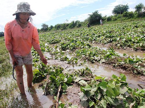 Thủy điện An Khê - KaNak xả lũ gây thiệt hại nặng cho người dân vùng hạ du Ảnh: HOÀNG THANH