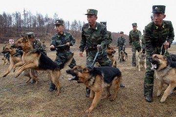 Quân đội Triều Tiên huấn luyện chó quân sự vào tháng 6-2013. Ảnh: Reuters