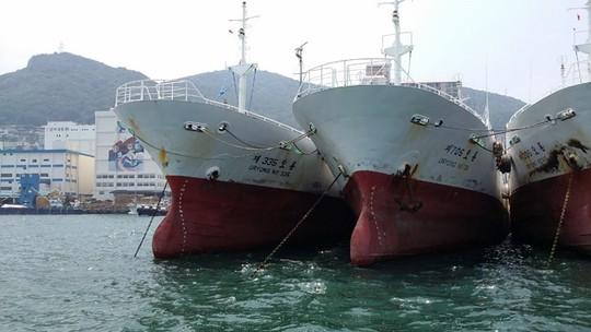Các tàu do Công ty Đức Khải dự định mua