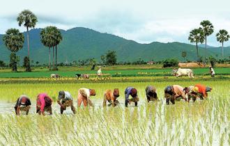 Campuchia có tiềm năng về diện tích đất chưa canh tác lớn, thêm vào đó nguồn lao động giá rẻ