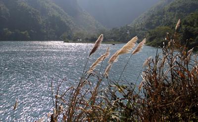 Mùa hoa lau bên sông Đà