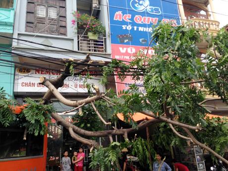 Chiếc xe bị tuột dốc húc đổ cây lớn trên vỉa hè.