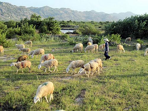 Sáu năm sau khi khởi công, KCN Du Long ở tỉnh Ninh Thuận vẫn trơ đất trống