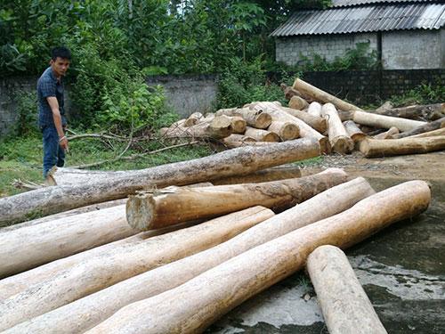 Số gỗ khai thác trái phép bị thu giữ