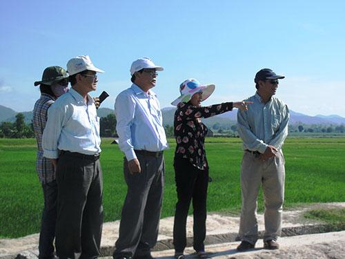 Đoàn đại biểu Quốc hội Phú Yên kiểm tra cánh đồng lúa nước ít ỏi của dân tái định cư thuỷ điện