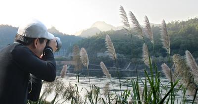 Du khách đến thăm quan, chiêm ngưỡng và lưu giữ khoảnh khắc đẹp về hoa lau bên sông Đà.