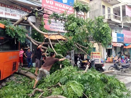 Phụ xe và người dân chặt, thu gọn cành cây bị gẫy đổ.