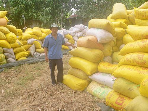 Ông Nguyễn Ngọc Thạch đang rầu thúi ruột bên đống lúa gần 40 tấn của gia đình mình vì có nguy cơ bị thương lái bỏ tiền đặt cọc và không mua lúa