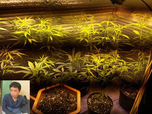Cần sa được trồng trong nhà kính và chủ nhân của chúng, Đỗ Hải Nam