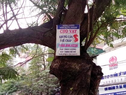 Thiếu tiền chuyện nhỏ, dịch vụ cho vay vốn sẵn sàng… leo cây