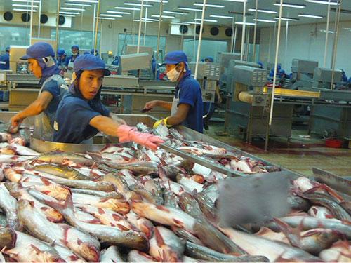 Quy định mới của Mỹ sẽ khiến ngành cá tra Việt Nam khó khăn. Trong ảnh: Cá tra chuẩn bị được chế biến xuất khẩu ở ĐBSCL Ảnh: CA LINH