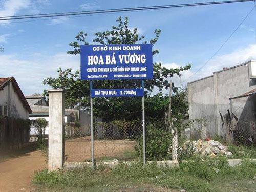 Cơ sở Hoa Bá Vương chuyên thu mua búp thanh long ở Bình Thuận