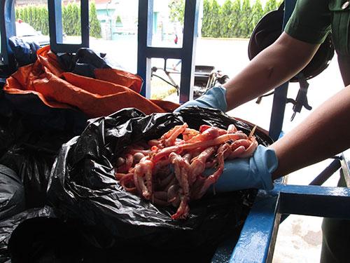 Số lòng vịt bẩn bị phát hiện trước khi đưa ra thị trường Ảnh: Ngọc ánh