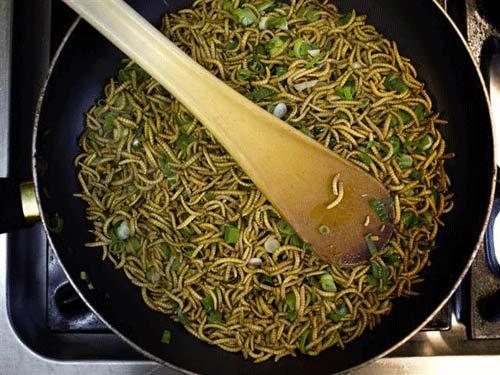 Sâu gạo chứa hơn 76% protein
