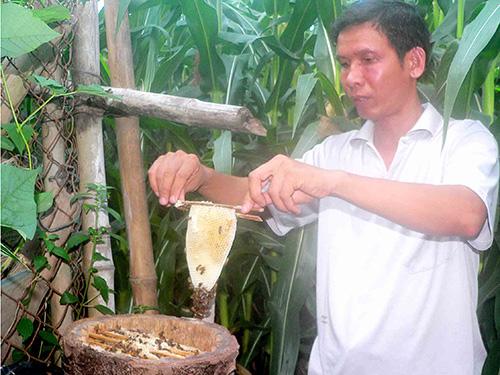 Thầy giáo Hồ Văn Tạo thu hoạch mật từ tổ ong do chính tay anh tự thiết kế