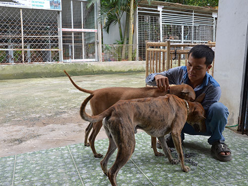 Anh Tưởng Văn Quý với công việc chăm sóc đàn chó Phú Quốc hằng ngày