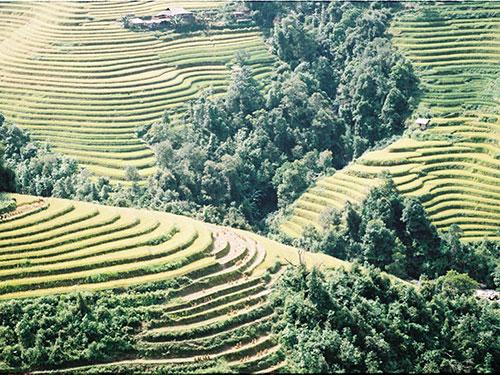 Những thửa ruộng bậc thang ở Hoàng Su Phì có tuổi đời trên 300 năm sắp vào mùa thu hoạch