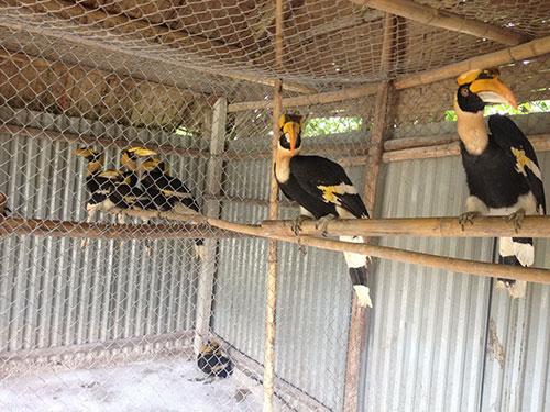 Chim Lạc Việt được nuôi ở Vườn Chim Việt