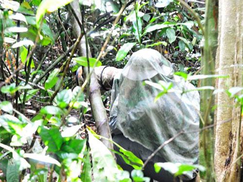 Một du khách ngụy trang để xem chim tại Vườn Quốc gia Cát Tiên Ảnh: NGUYỄN HOÀI BÃO