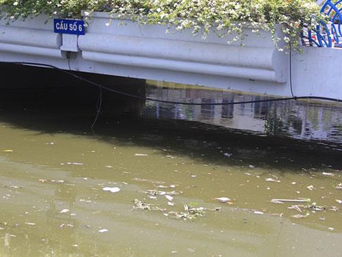 Cá chết hàng loạt đoạn qua cầu số 6, phường 11, quận 3, TP HCM