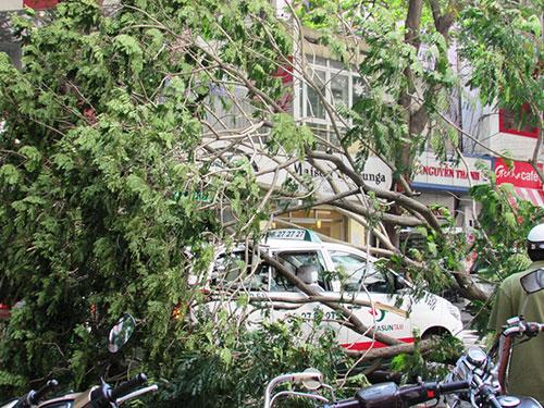 Hiện trường cây xanh ngã đổ đè lên taxi (ảnh lớn) và 1 xe máy (ảnh nhỏ) tại giao lộ Pasteur - Lê Thánh Tôn, quận 1 vào chiều 30-5 Ảnh: Tân Tiến